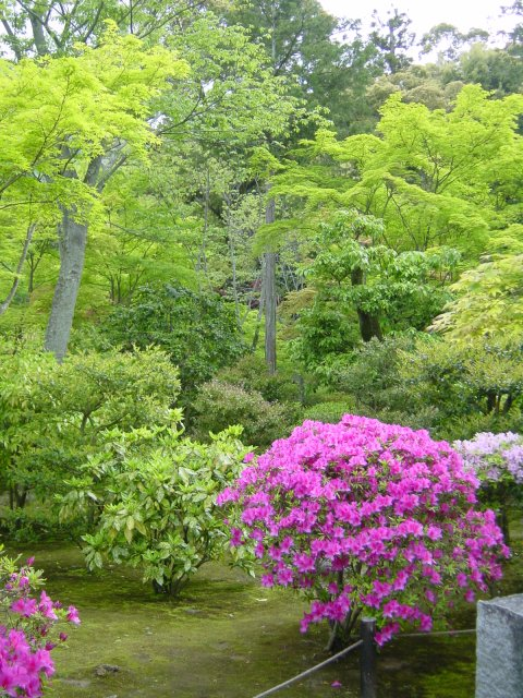 Kyoto - Congeler des aubergines du jardin ...