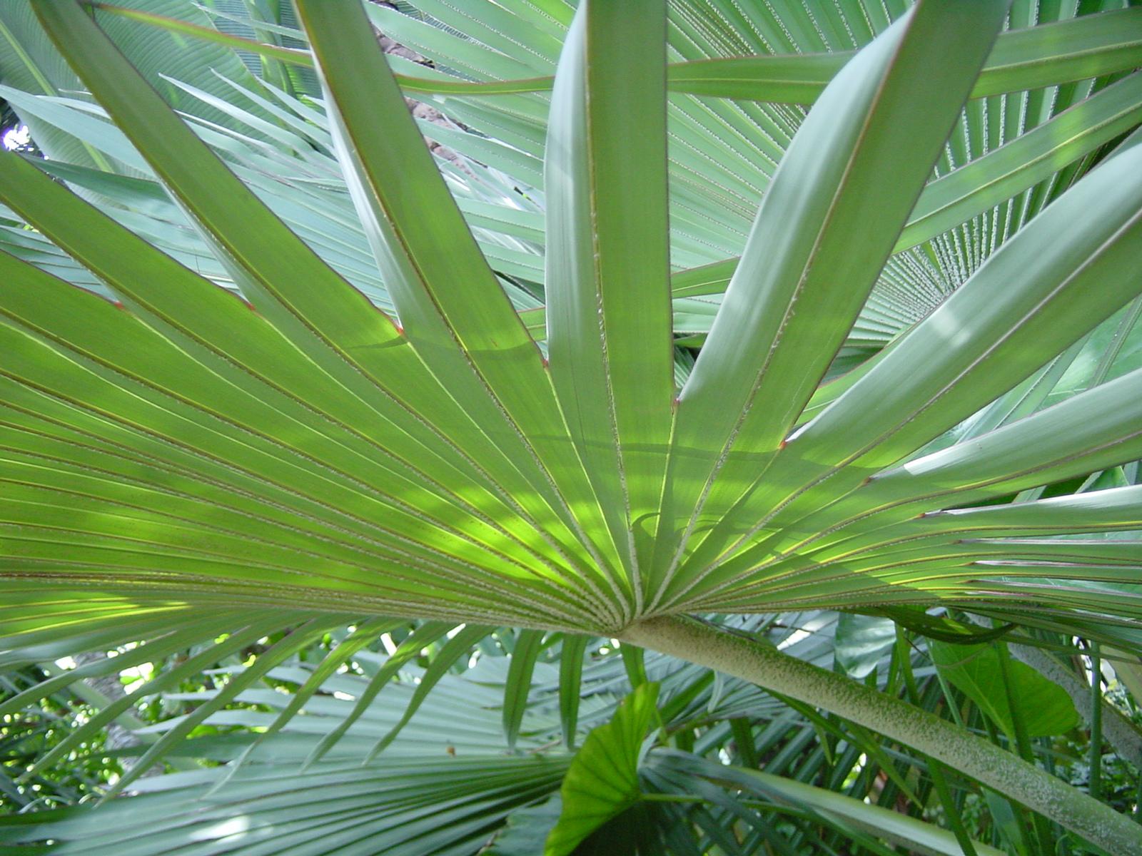 Feuille de palmier jardin shinjuku tokyo japon pictures for Decoration jardin palmier